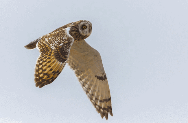 Do Owls Eat Their Food Whole