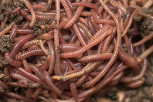 Worms - what do worms eat